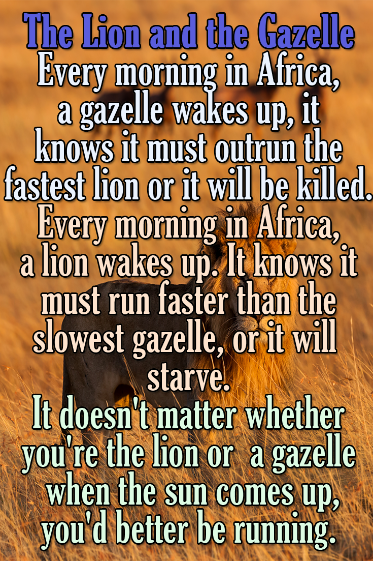The Lion and the Gazzele
